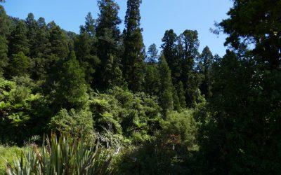 Tongariro – Oparau